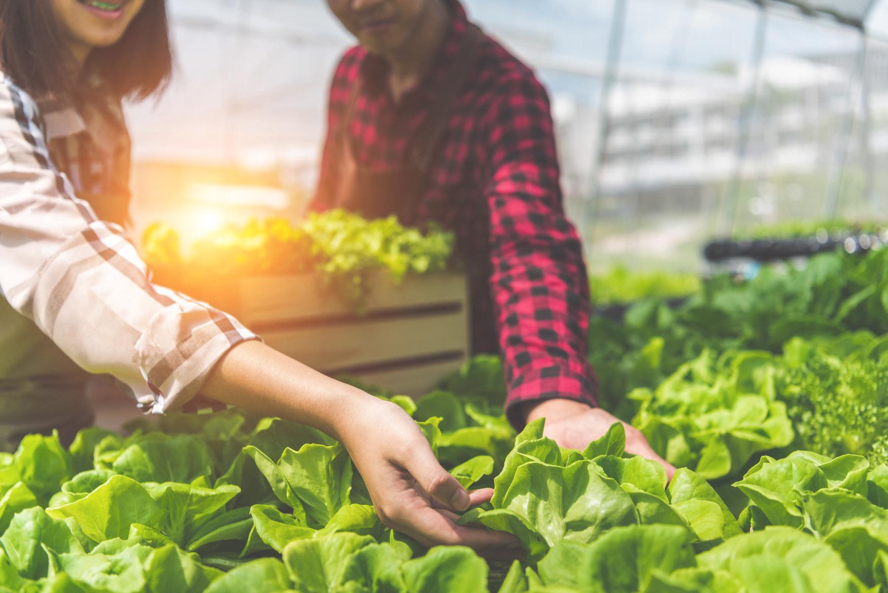 温室で働く農家の若いカップル